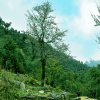 Annapurna-Base-Camp-via-Ghandruk