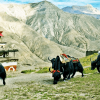 Are-you-making-plan-for-Upper-Dolpo-Trekking