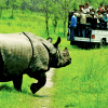Are-you-planning-for-Jungle-Safari-in-Nepal