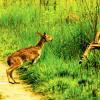 Attraction-towards-Jungle-Safari-in-Nepal