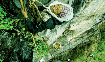 Honey Hunting - Adventure White Himalaya Treks
