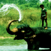 Feel-the-natural-beauty-of-Chitwan-Kathmandu-Chitwan-Lumbini-and-Pokhara