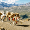 Go-for-Upper-Dolpo-Trekking