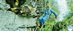 Photo of - Honey Hunting in Lamjung Adventure White Himalaya Treks