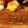Honey-Hunting-makes-you-feel-proud