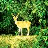 Jungle-Safari-takes-you-close-to-wildlife