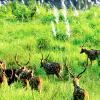 Priceless-Jungle-Safari-Adventure-in-Nepal