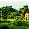 Really-Amazing-Jungle-Safari-in-Nepal