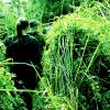 The-best-Jungle-Safari-Adventure-in-Nepal